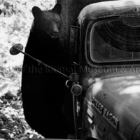 Bear on survey truck