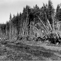 Townsite land clearing with 4-ton steel ball